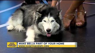 Rescues in Action: Bella - Video