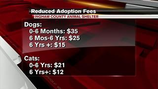 Ingham County Animal Shelter slashes adoption fees by 75% due to overcrowding - Video