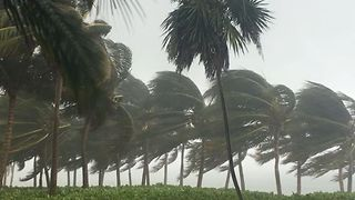 Strong Wind Gusts Churn Waves, Whip Trees in Eastern Mexico Resort - Video