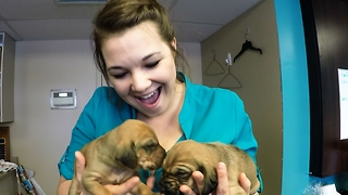 Cuddling with adorable rescued hound puppies
