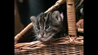A Beginner's Guide To: Wild Kittens - Video