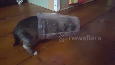 Tiny pooch crawls inside plastic cup on National Puppy Day