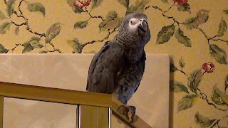 Parrot wants to know where is the US stimulus money