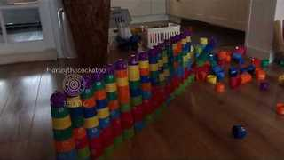 Spirited Cockatoo Annihilates Stacks of Cups - Video