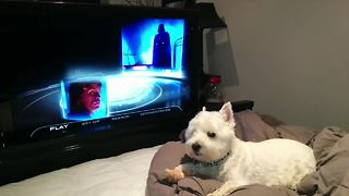 Dog couldn't care less about 'Star Wars' hype - Video
