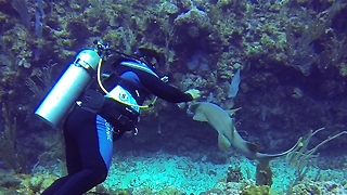 Baby nurse shark wants to be pet - Video