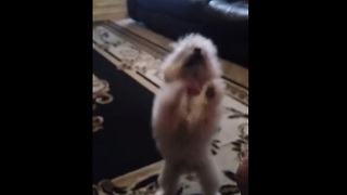 Excited dog breaks into happy dance for food