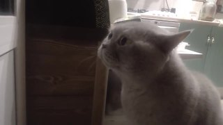 Kitty Is Very Displeased With An Unexpected Visitor - Video