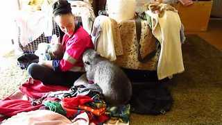 This Wombat Is Cute, but Not Very Helpful With Folding Laundry - Video
