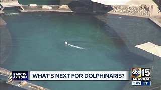 What's next for Dolphinaris?