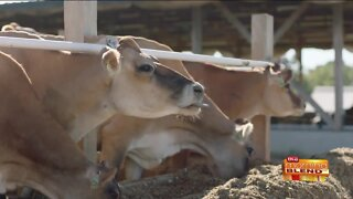 Taking a Look at a Wisconsin Fifth-Generation Family Farm for Dairy Month