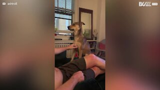 Dog seeks attention for more affection from owner