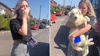 Ecstatic Woman Breaks Out Into Tears Of Happiness After Meeting Dog Adopted From Romania For First Time