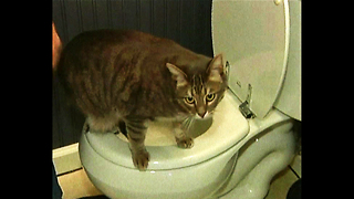 Cat Uses Toilet - Video