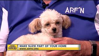Rescues in Action July 21, 2018: Suzie seeks furever home - Video