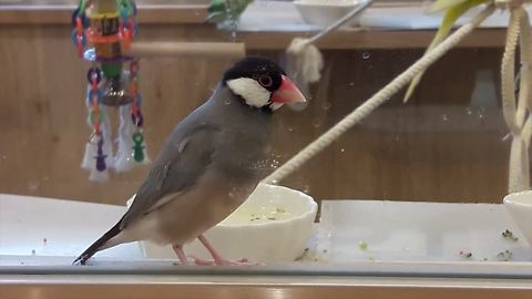 Bird cafe becoming very popular in Japan