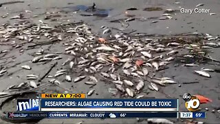 Researchers looking into chance of toxic algae in San Diego