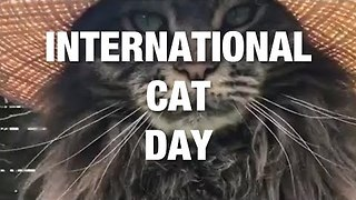 Celebrating Beloved Cats Everywhere - Video