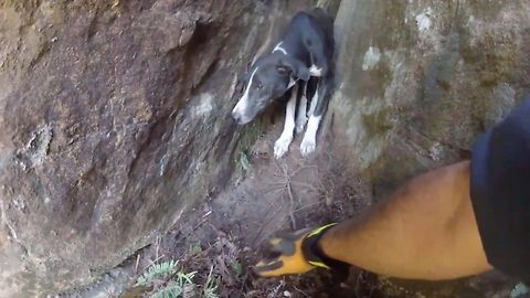 Rescuer abseils cliff to save dog stranded for six days