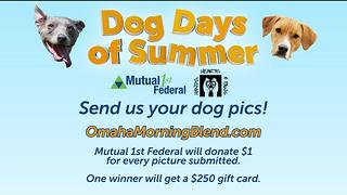 Dog Days of Summer Contest - Video