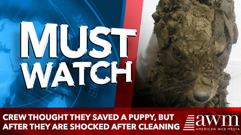 Crew Thought They Saved A Puppy, But After They Clean Her Up They Are In For A Surpirse