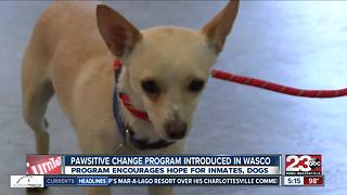 Marley's Mutts spreading Pawsitive Change program to Wasco State Prison - Video