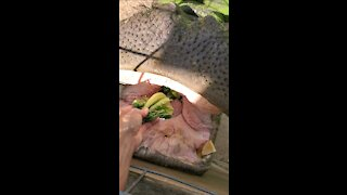 Woman fearlessly hand-feeds a giant hippopotamus