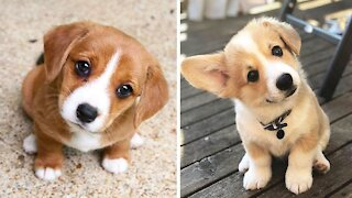 Cute Puppies Cute Funny and Smart Dogs Compilation 4 Cute Buddy_1080p