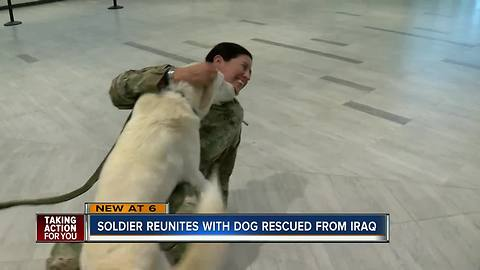 U.S. Soldier reuniting with dog she rescued more than a year ago in Iraq