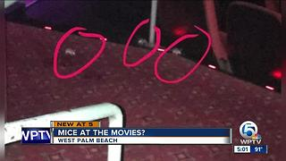 Complaints over rats at CityPlace movie theater - Video