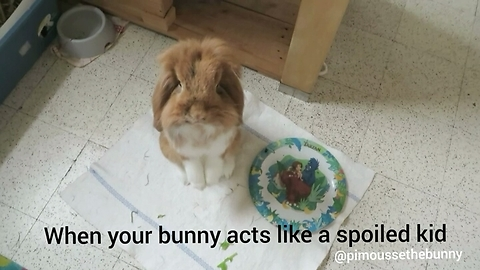 When your bunny acts like a spoiled kid