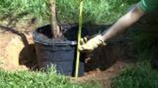 How To Plant and Transplant Trees - Video