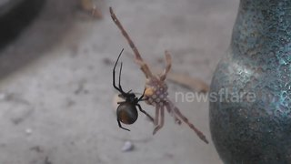 Man provides hilarious commentary while spider eats its prey - Video