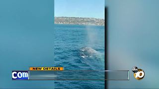 Close call with whales off the coast - Video