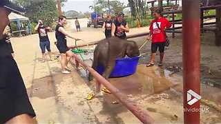 Adorable Baby Elephant Loves Taking Baths - Video