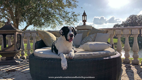 Laid back puppy chills out on patio lounger