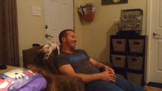 Clingy Chihuahua Won't Leave His Owner Alone - Video