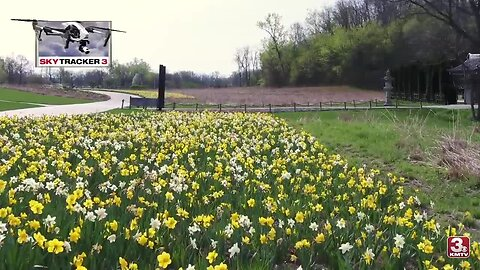 50,000 daffodils on display at Lauritzen Gardens