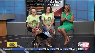 Rescues in Action Sept. 28: Honey needs forever home