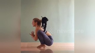 Rachel and her goat are the most adorable yoga partners ever - Video