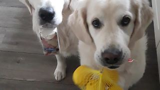 Owner Sneezes, Dogs Fetch Tissues And Lemons For Her