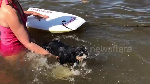 Adorable pup is terrified after falling into the water