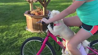 Adorable Little Dog Enjoys A Bike Ride - Video