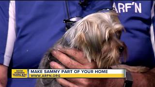 Rescues in Action: Sammy - Video