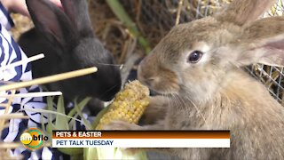 Pet Talk Tuesday - Easter and pets