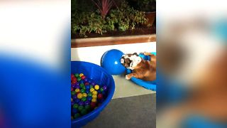 Bulldog Playtime Party - Video