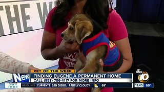 Pet of the Week: Eugene