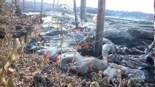 Hawaiian Volcano's Lava Flow Burns Forest - Video