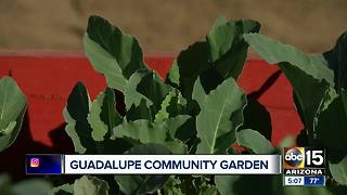 Community garden opens in Guadalupe - Video