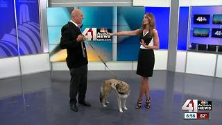 Have you heard of dog squatting? - Video